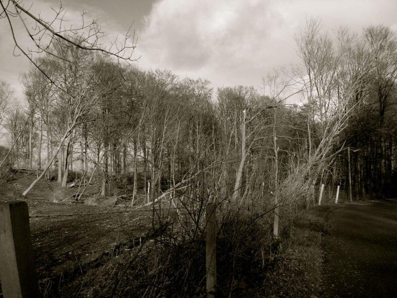 Stormen 4.11.2013 lagde træer ned som var de dominobrikker. Nakkebølle, Sydfyn